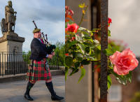 Bag Piper and Roses, Stirling © 2018 Keith Trumbo