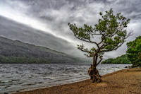 Tree, Loch Lomond, Scotland © 2018 Keith Trumbo